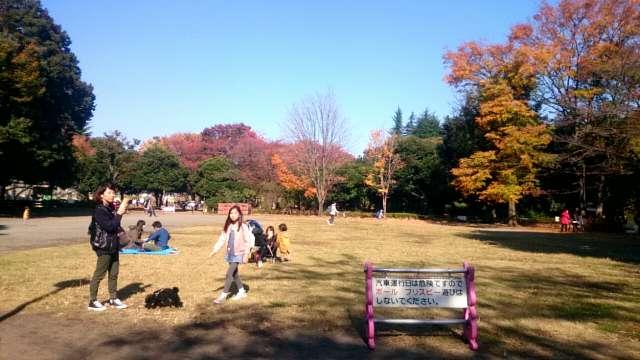 setagaya-park-kaede-001